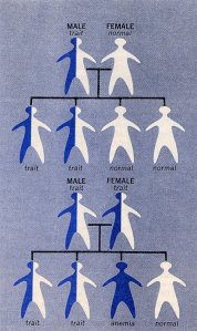 """Illustration from Medical World News article, """"Sickle Cell Anemia"""" December 3, 1971."""