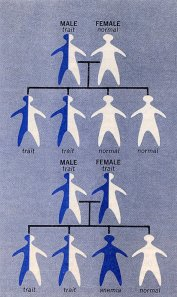 "Illustration from Medical World News article, ""Sickle Cell Anemia"" December 3, 1971."