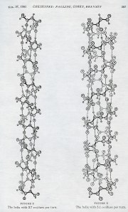 "Figures from ""The Structure of Proteins: Two Hydrogen-Bonded Helical Configurations of the Polypeptide Chain,"" 1951."