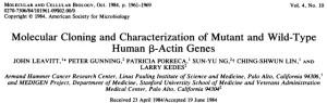 actin cloning